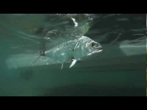 "Fly Fishing DVD :: PREDATOR :: Drake Video Awards winning film ""Best Movie"" 2012"