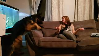 Owner Performs magic trick on Shadow the unsuspecting German Shepherd