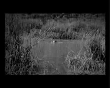 Manu Chao - Rainin In Paradize