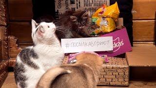 На это можно смотреть часами счастливые животные из приюта Дари добро Новосибирск
