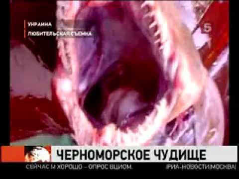 shark attack 3 Black Sea нападение акул 3 Чёрное Море