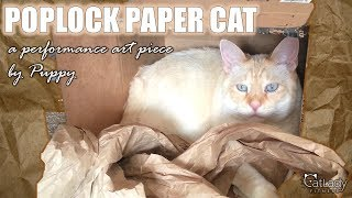 Pop Locking Paper Cat - an oddly satisfying feline performance art piece 🎭