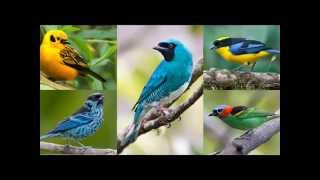 The wonderful world of birds. Maybe Birds Can Have It All: Dazzling Colors and Pretty Songs