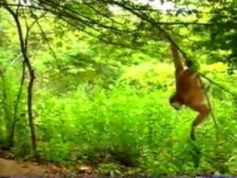 monkey pranks leapord