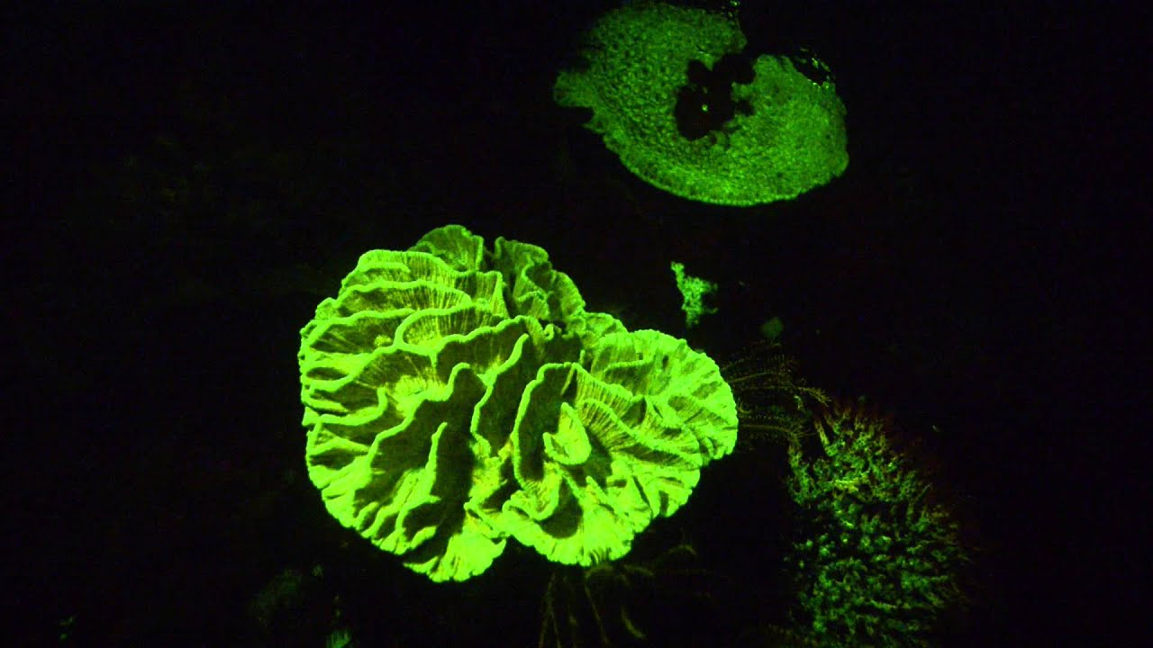 Fluoro Diving Fluoro Diving Perth Scuba