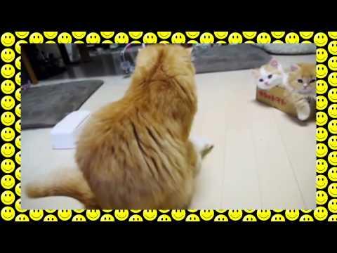 Cute kittens and a box (Популярная коробка)