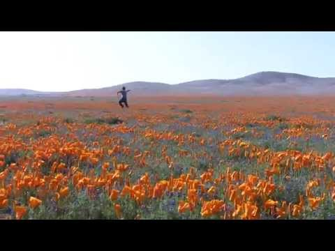 cali poppy reserves