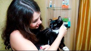 Подберем корм для кошки АСМР Зоомагазин ASMR Role Play