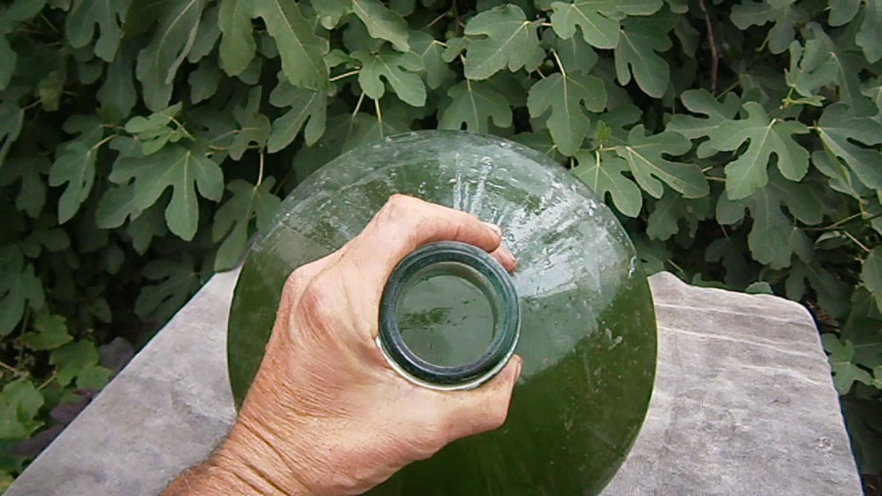 Выращивание хлореллы в домашних условиях в банке 69