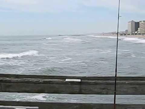 Catching bluefish at the va beach fishing pier youtube for Seaview pier fishing report