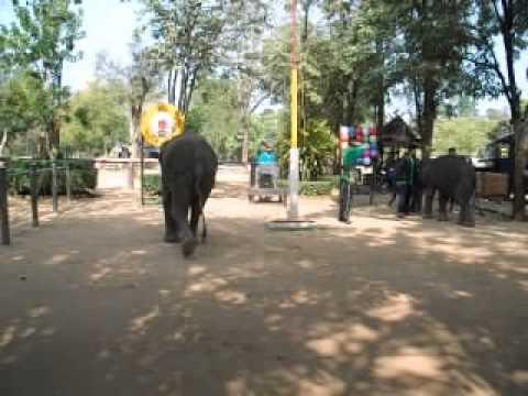 Шоу слонов, массаж Яичница, Тайланд, Паттая, 2013