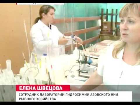 Новости сегодня  Экология Крыма от моста не пострадает
