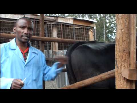 Modern Farming in Kenya
