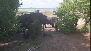 Day 24 - Chobe National Park, Botswana - Elephants