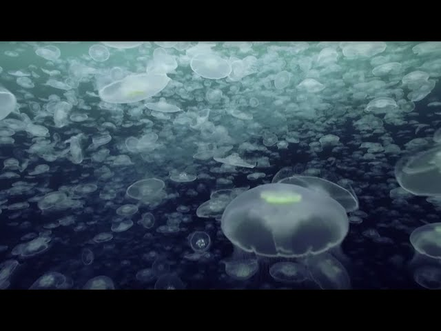 Open Ocean 10 Hours of Relaxing Oceanscapes  BBC Earth