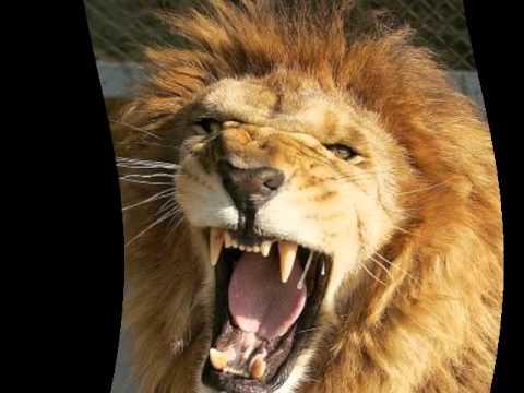Salvador, Henry - Le Lion Est Mort Ce Soir