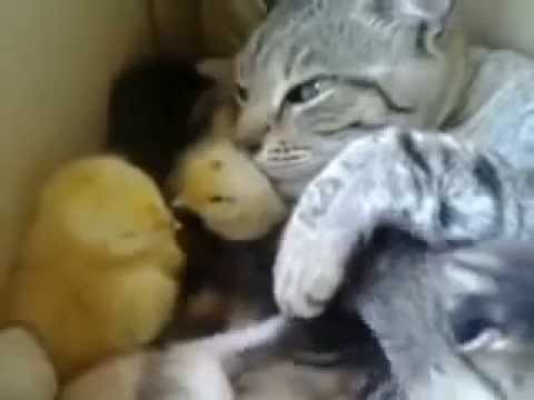 Funny Cat Videos 2014: The most adorable cat in the world