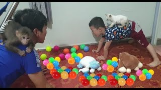 Baby Monkey | The Playtime Of Tom, Doo and Cat Miu With Daddy