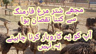 Ostrich Farming Mara Farm profit ma ya Loss ma????  #Ostrich