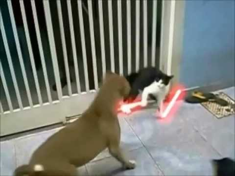 Sith Lord Cat vs Dog