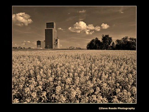 John Denver - Wildflowers In A Mason Jar