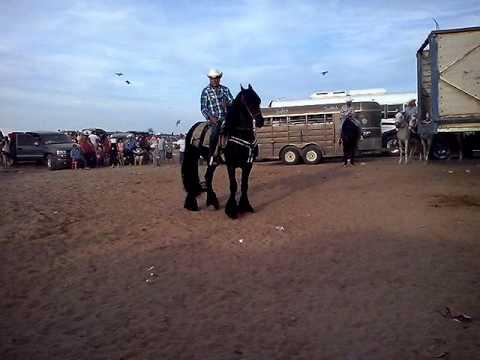 Playas del siaric caballo bailador