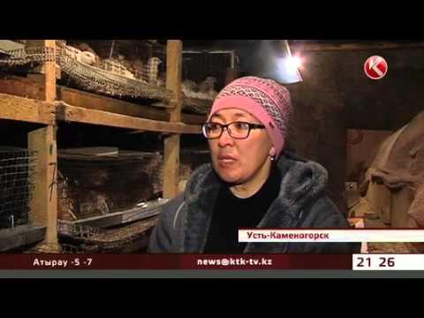 Секрет успеха усть-каменогорской семьи – в перепелиных яйцах