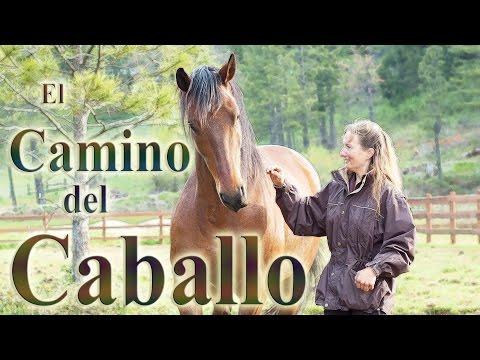 El Camino del Caballo - documental - subtítulos español