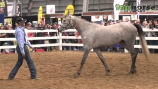 Equitana Melbourne - Ali Al Ameri Horse Training for Film Work Part 1