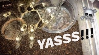 "WATERING my TARANTULAS ""(Part 7)"" !!!"