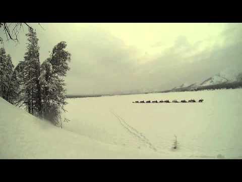 reindeer 2014 yakutua thumbnail