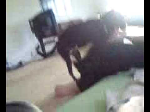 Nadia Gets Raped By A Dog. video
