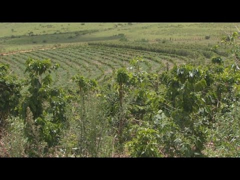 Drought in Brazil may hit your coffee mug