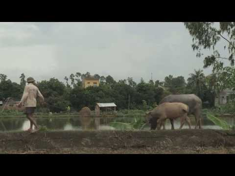 World Food Day 2013 video feature: Sustainable Food Systems for Food Security