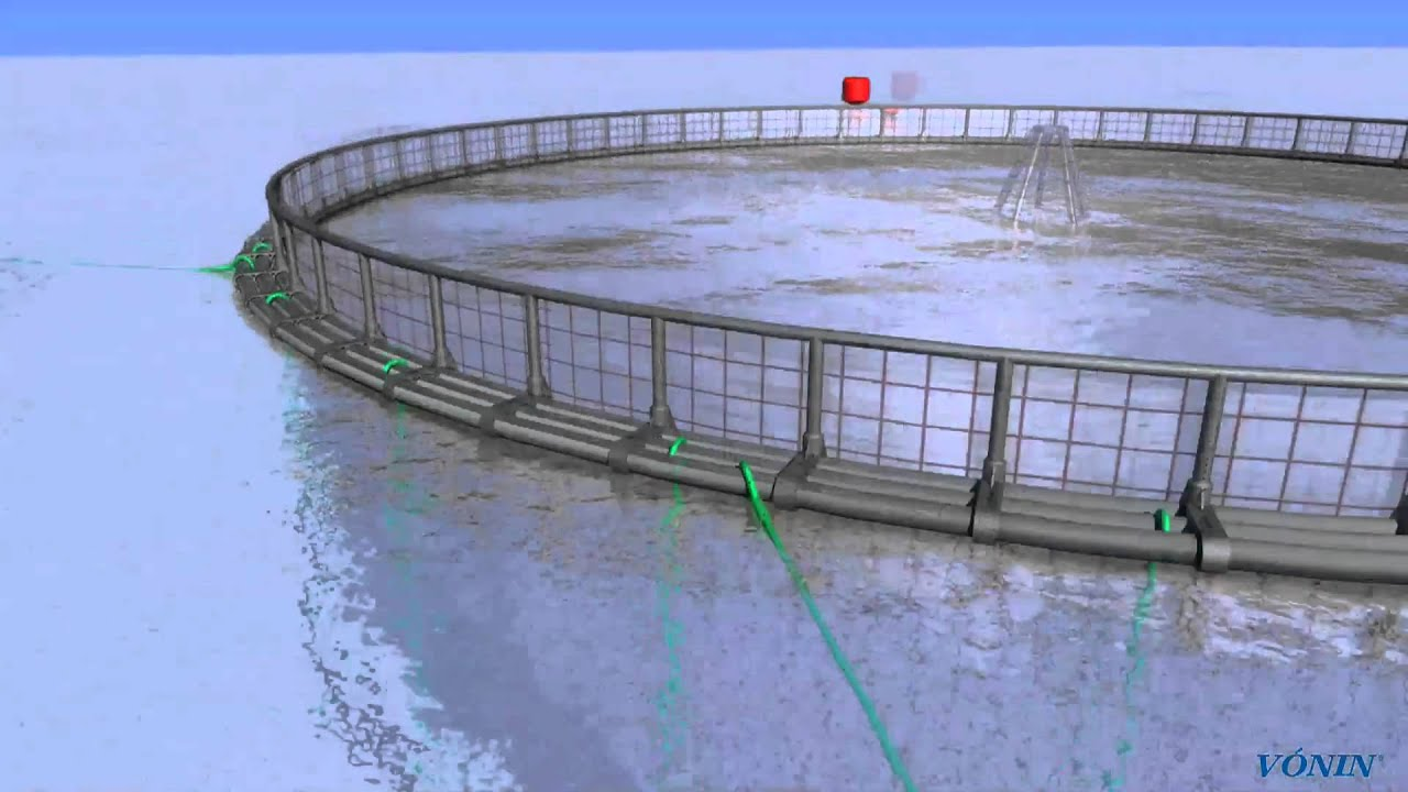 System Fish Fish Farming System in 3d