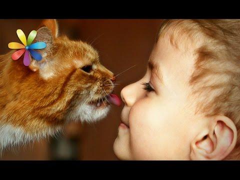 Как выбрать ласкового кота для ребенка? Топ-3 пород! – Все буде добре. Выпуск 815 от 25.05.16