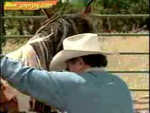 Horse Training Video: 11 of 12 Music Videos