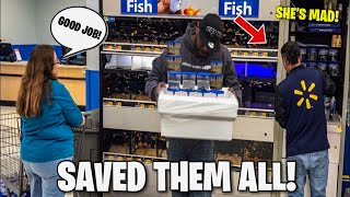 RESCUING all the DYING BETTA FISH from WALMART, FISH ABUSE!