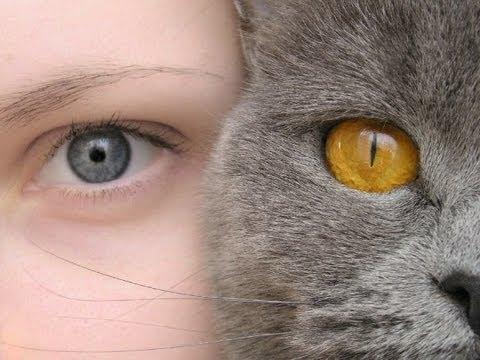 Кошки как люди