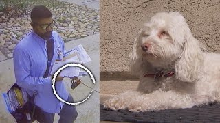 Postal Worker Caught Apparently Spraying Dog