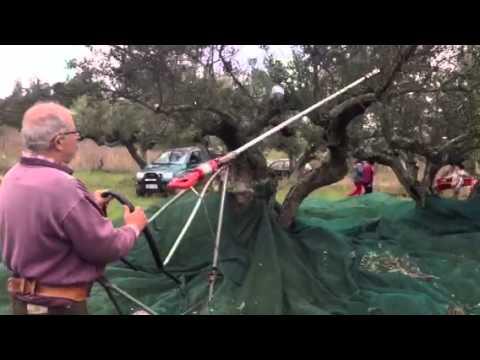 Πατέντα για μάζεμα ελιάς (Κύθηρα)