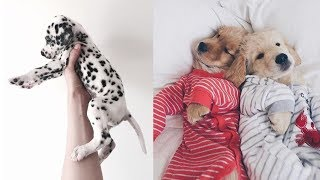 Cute Baby Animals Videos - Funny Baby Animals - Cute Moment of the Animals - Soo Cute! #14