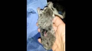 deformed kittens