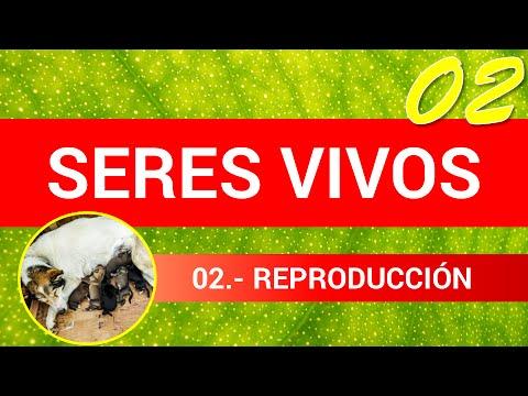 Los Seres Vivos 02: Reproducción
