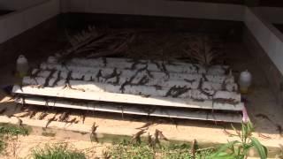 trang trại rắn mối diệu trang - Bình Sơn - Quảng Ngãi (0905031155)