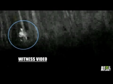 Creepy Sounds and Sightings on