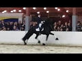Eise 489 Hengstenshow St Nyk Met Marsja Dijkman mp3