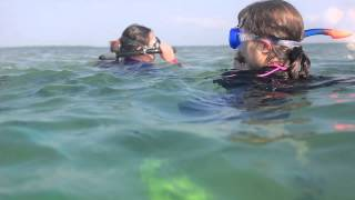 Marine Bio Update 2 - Snorkeling Spanish Harbor Key