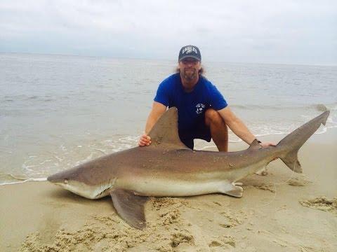 Shark fishing New Jersey surf 2014
