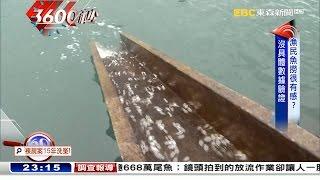 每年花近3000萬 魚苗放流有成?【3600秒】